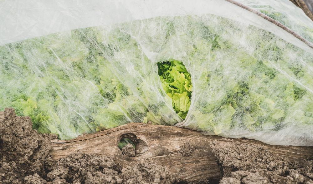 Groeivlies beschermt gewassen tegen de kou | Soluvert